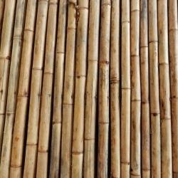 bamboo-1670007_1280